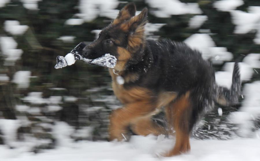 Q Schnee2